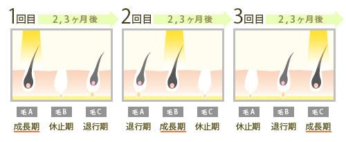 毛周期と回数の説明
